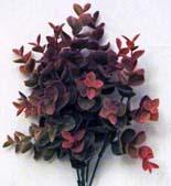 succulent pink spray