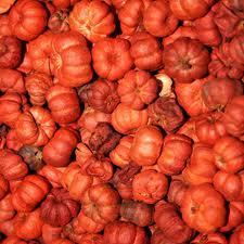 Pumpkin Putka Pods